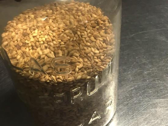 barley-s