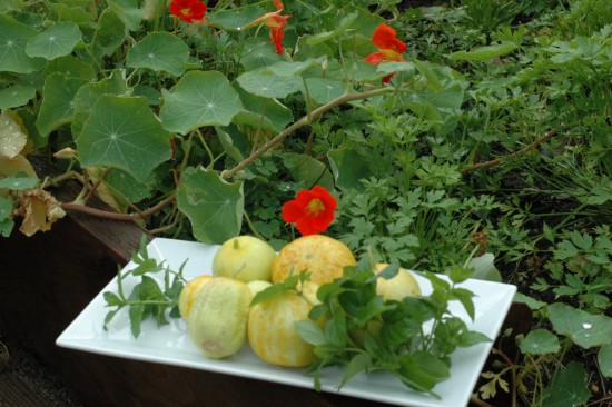 Lemon Cucumbers from the Estia garden for Lymanade recipe