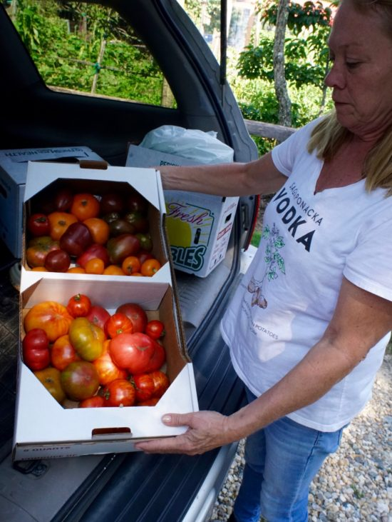 Heirloom Tomato delivery from the Foster Farm